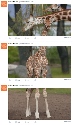 chester_zoo-twitter